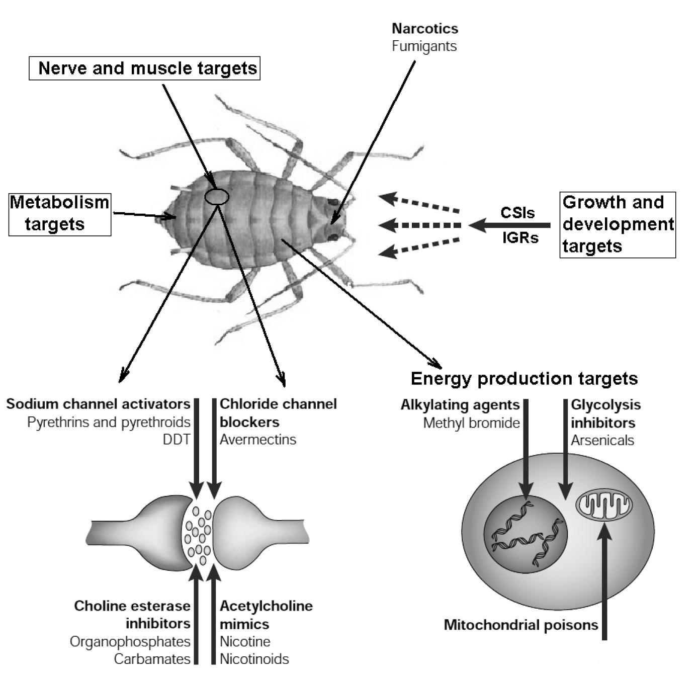 ciprofloxacin side effects pediatric